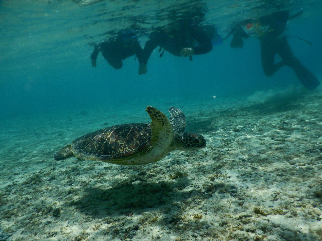 宮古島の海ガメ